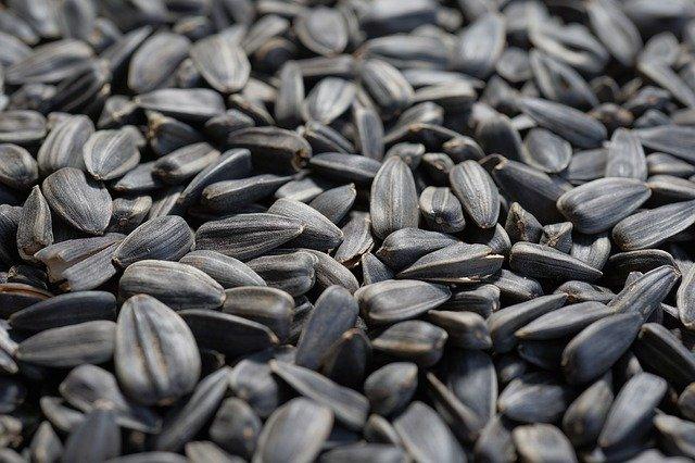 Graines de tournesol : certains aliments contiennent de la vitamine B1 en abondance.