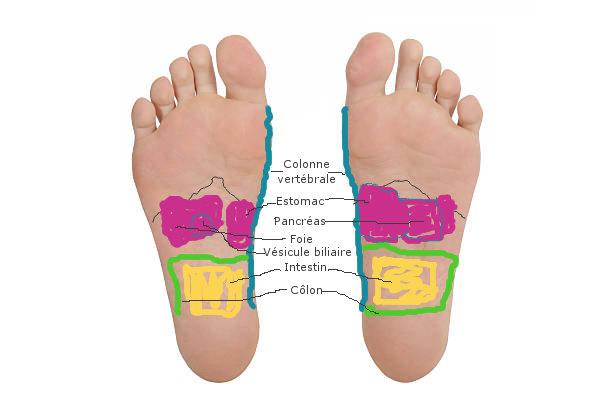 Réflexologie plantaire: zone du système digestif.