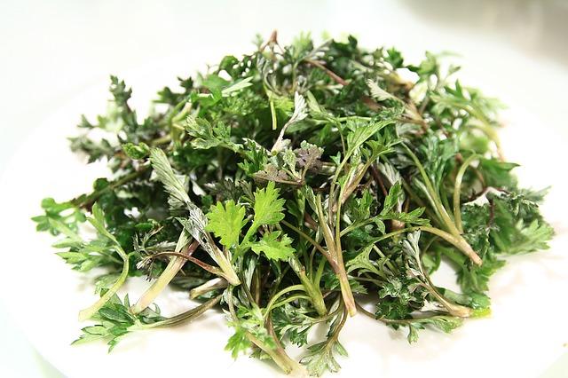 Armoise annuelle (Artemisia annua): plante aux nombreux bienfaits et propriétés médicinales.