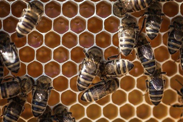 Miel et abeilles : la gelée royale et la propolis sont des produits de la ruche.