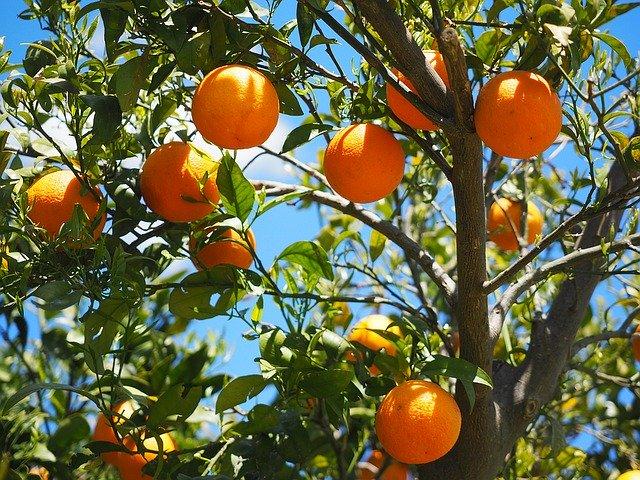 Oranger: caractéristiques de l'élixir floral.