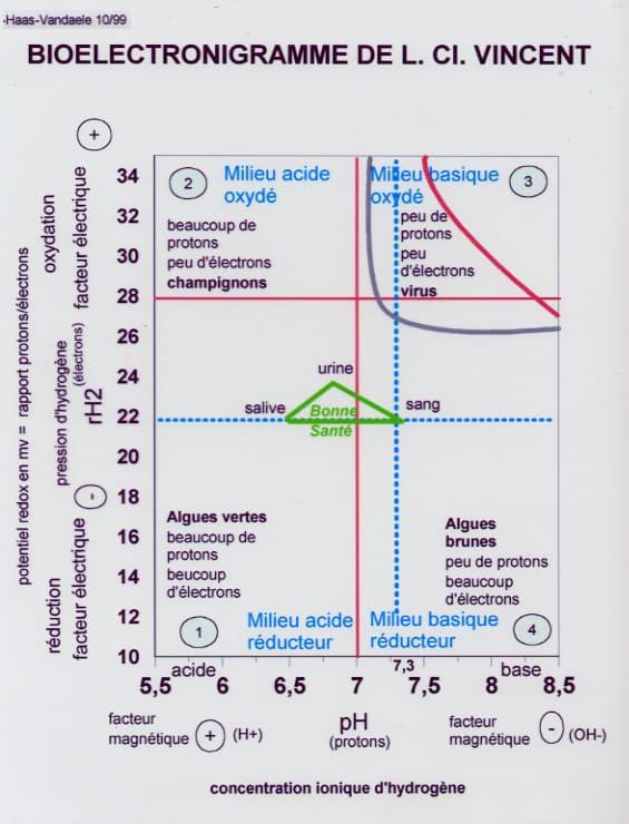 Bioélectronigramme de L. C. Vincent: les quatre terrains