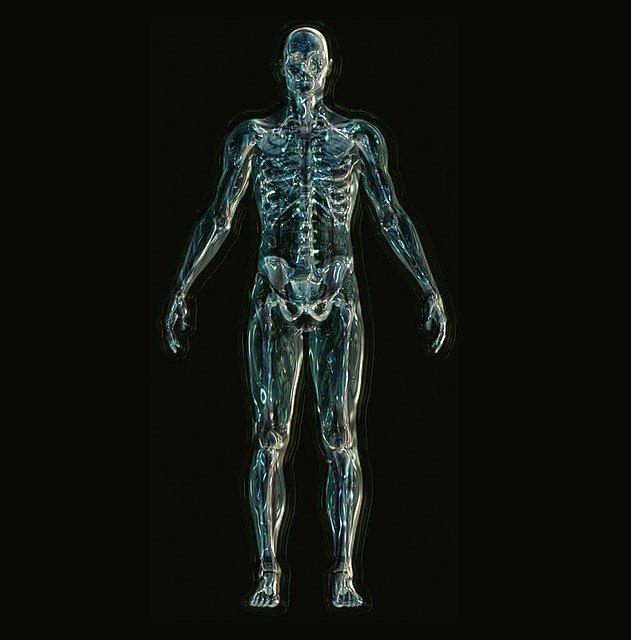 Squelette: articulations et douleurs articulaires associées.