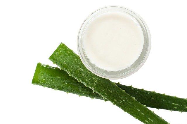 Gel d'aloe vera dans un bol: à appliquer sur les cheveux.