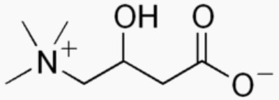 Molécule de L-carnitine
