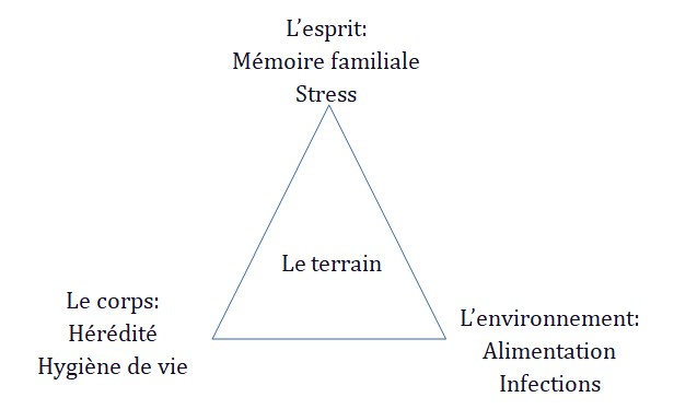 Le triangle de bien-être en naturopathie.