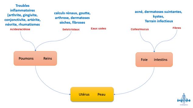 Schéma représentant les émonctoires et l'élimination des déchets organiques.