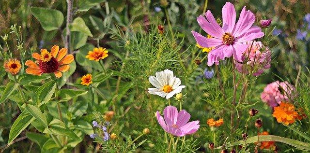 Pollen de mille fleurs: bienfaits et propriétés.