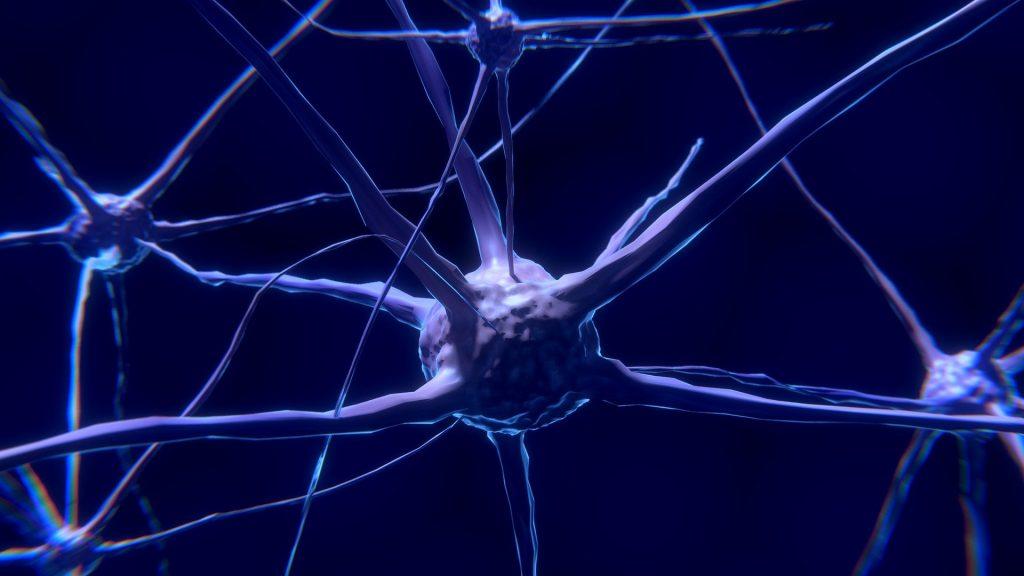 Neurones du cerveau: de la choline et de l'inositol pour un bon cerveau.