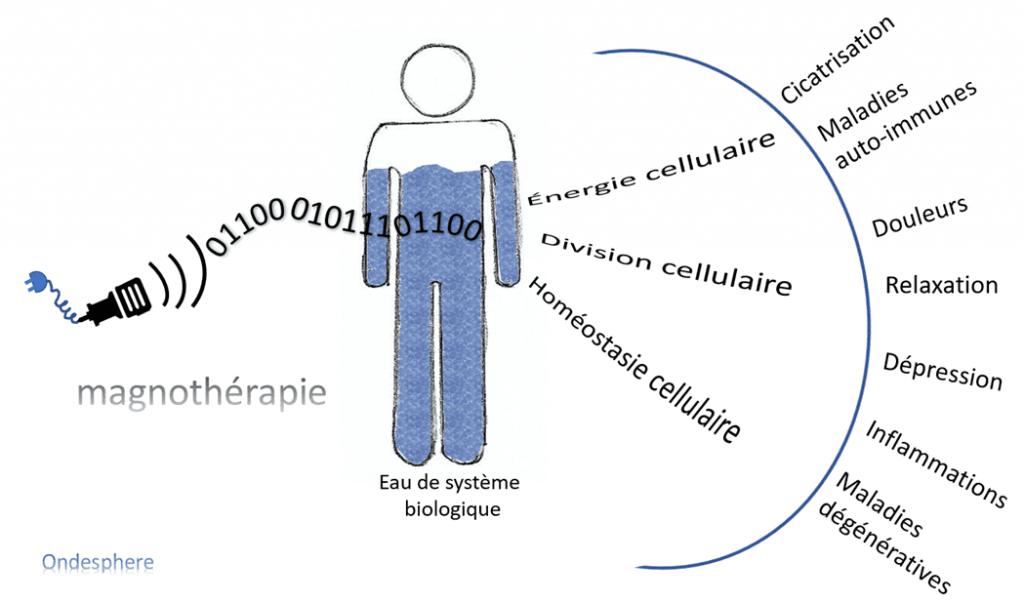 Schéma représentant les bienfaits de la magnothérapie sur certaines pathologies.