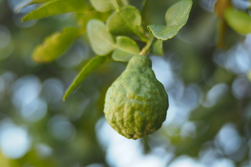 Bergamote : bienfaits et utilisation de l'hydrolat.