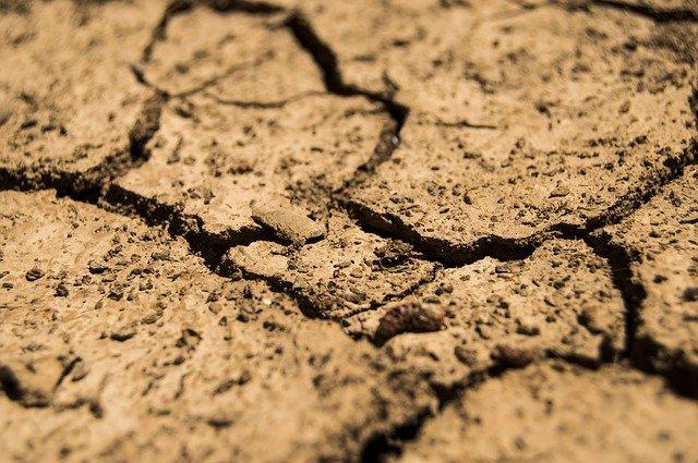 Sol terreux : l'acide fulvique est présent dans le sol (humus).