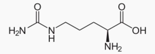 Molécule de Citrulline: bienfaits, dosage et danger de cet acide aminé.