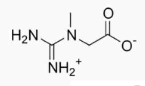 Créatine : bienfaits, utilisation et danger de cette molécule.