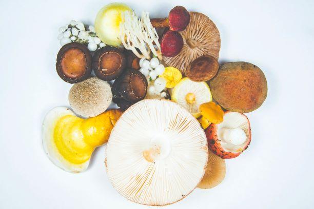 Reishi, shiitake et maitake : bienfaits de chaque champignon.