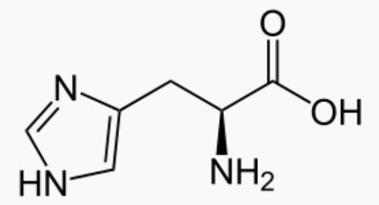 Molécule d'histidine : bienfaits et effets secondaires de cet acide aminé.