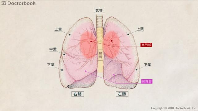 肺血栓塞栓症ってどんな病気? 起こりやすいのは機内だけではない
