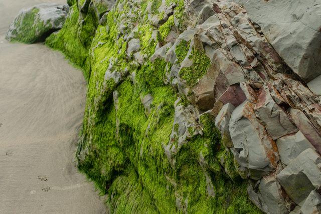 Funston Beach, Moss