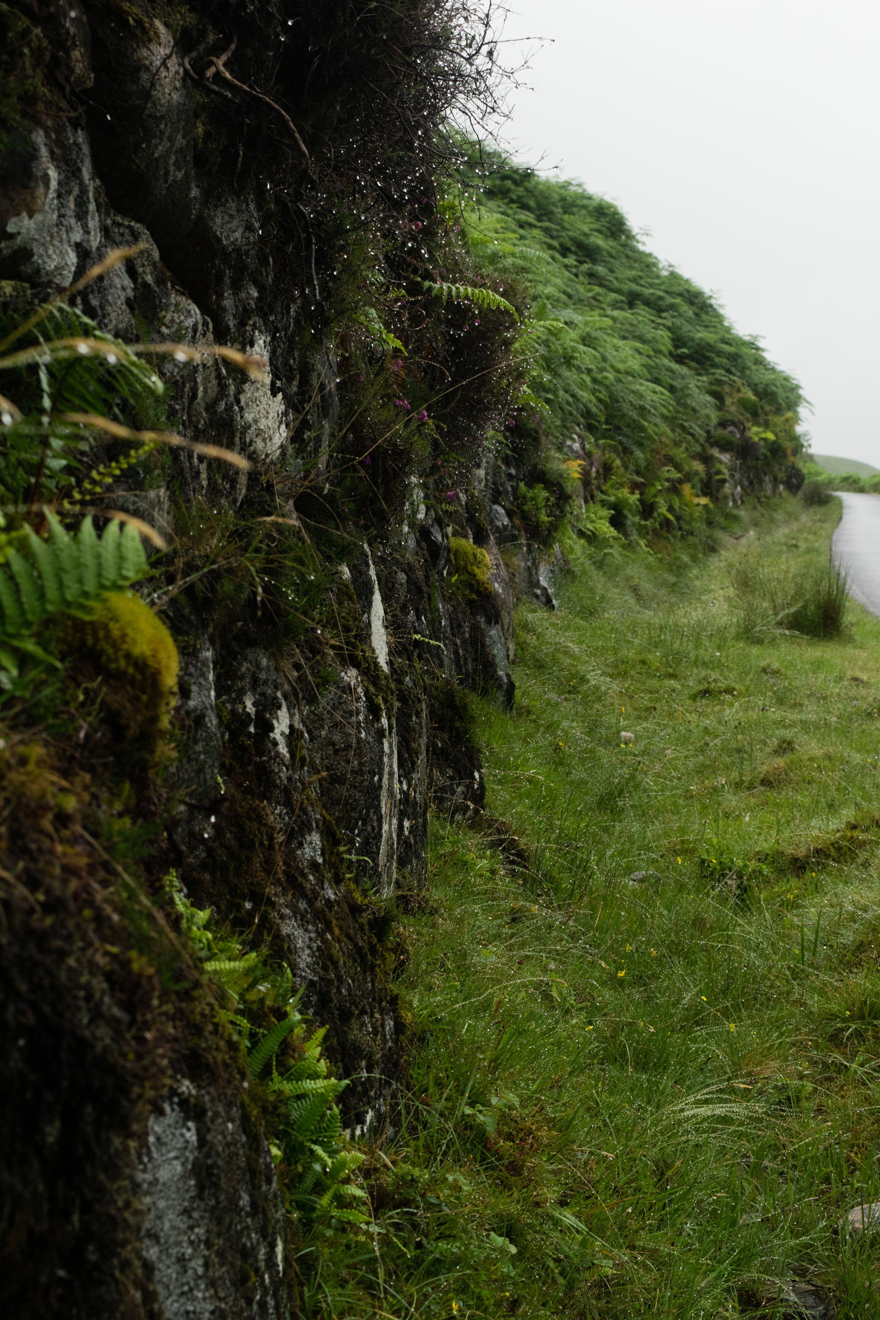 Scottish Highlands, Fence 2