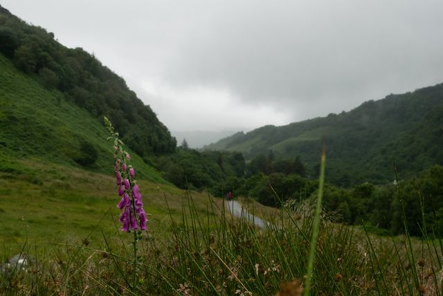 Scottish Highlands, Flower