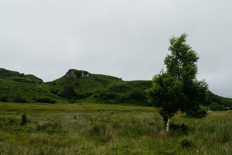 Scottish Highlands, Tree
