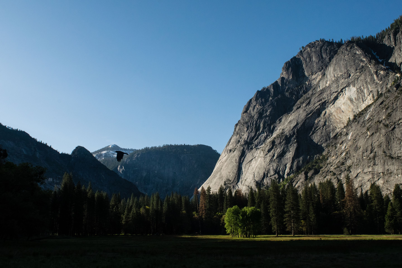 Yosemite, Hawk