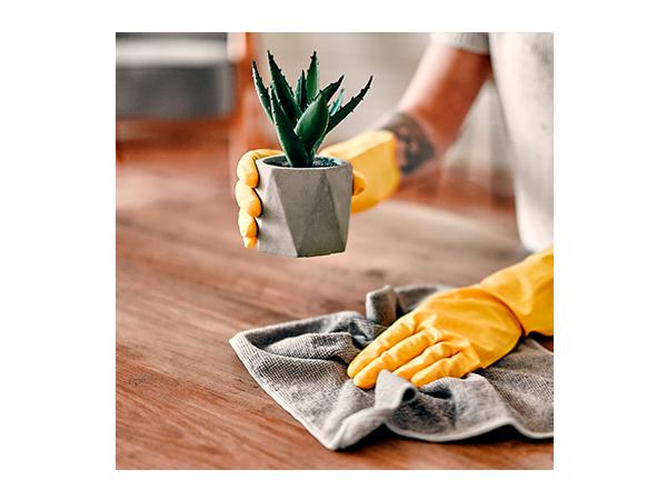 highlight of 15 passos para limpar a sua casa e atrair boas energias!