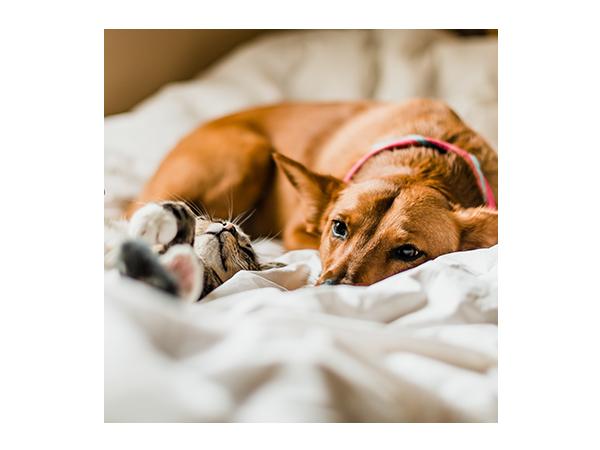 highlight of 10 coisas que precisa para ter um animal