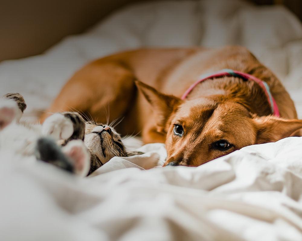 10 coisas que precisa para ter um animal