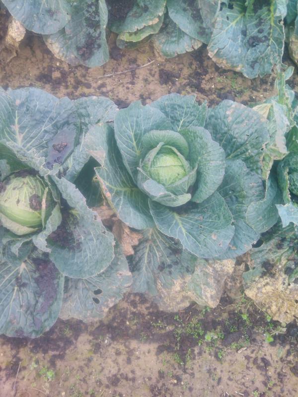 panier de légumes bio de saison
