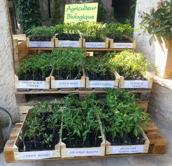 Plants Bio de Tomates !