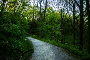 University of Michigan Arboretum trail.