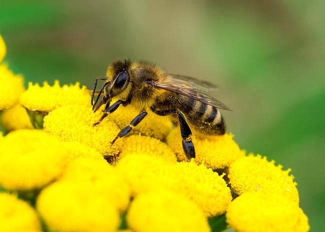 Aujourd'hui 1er septembre : interdiction des pesticides tueurs d'abeilles en France