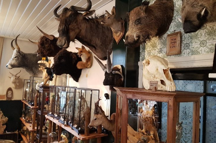 Taxidermy Room `de Groene Kamer`