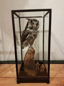 Vitrine - Schaufenster Schwartz 19 x 19 x 40 cm
