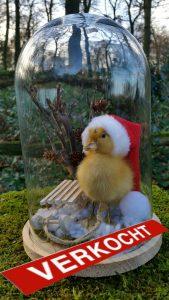 Entenküken in Stolpe in Weihnachtsstimmung - Ausgestopft - Tierpräparation - Präparat - Taxidermy