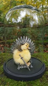Eendje taxidermy `The King of Game Of Thrones ` in opgemaakte Stolp - Taxidermy - Opgezet - Geprepareerd​