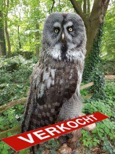 Bartkauz - Tierpräparation - Präparat - Taxidermy