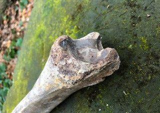 Mammut-Knochen aus der Eiszeit von ca. 40.000 Jahre alt!