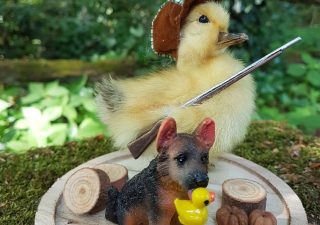 Eendje taxidermy `Hunting Duck with Dog with Prey ` in opgemaakte Stolp - Taxidermy - Opgezet - Geprepareerd