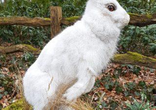 Schneehase - Ausgestopft - Tierpräparation - Taxidermy