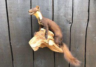 Boommarter die kan hangen of staan