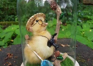 Eendje in Stolp met opgezette eend `Ontdekkingsreiziger` - Taxidermy - Opgezet - Geprepareerd