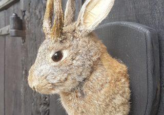 Wolpertinger - Ausgestopft - Tierpräparation - Taxidermy