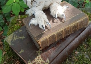 Sneeuwuil Man - Harry Potter uil - opgezet - preparaat - taxidermy