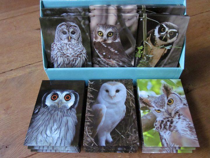 Owl Memo block