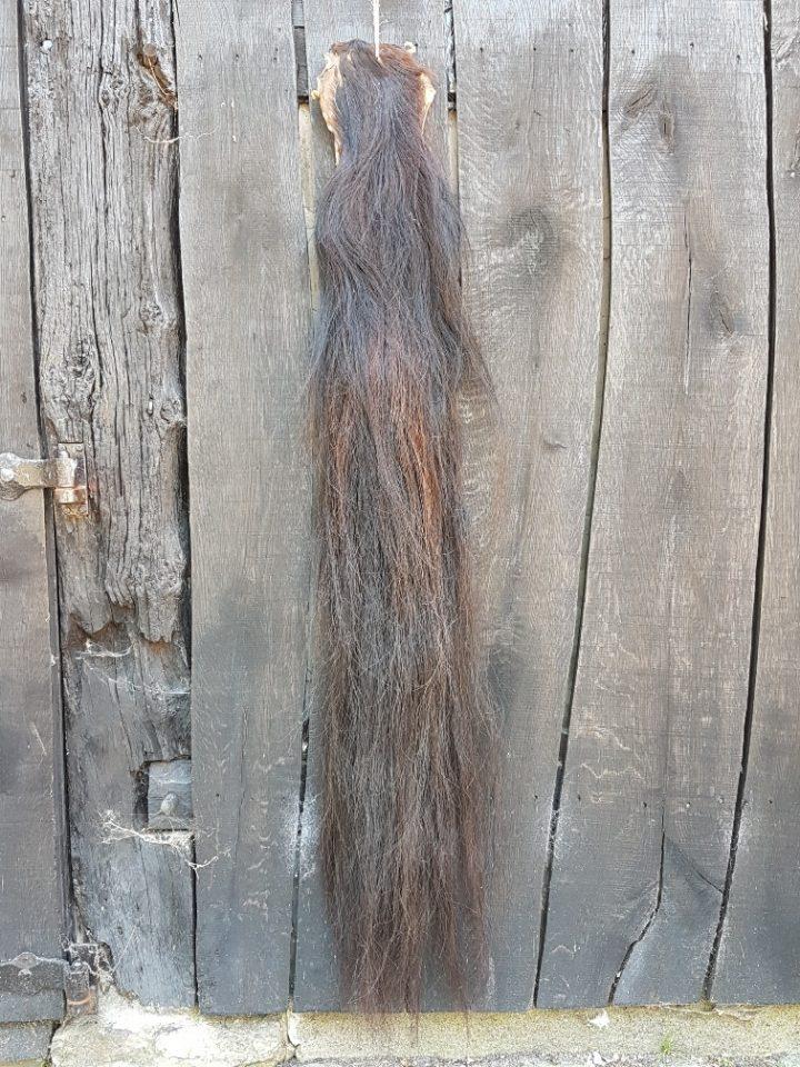 Paardenstaart  donker 145 cm