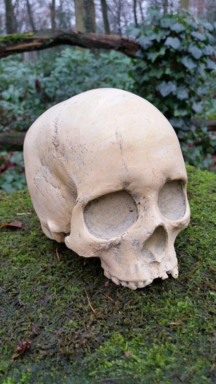 Schedel replica Homo Sapiens