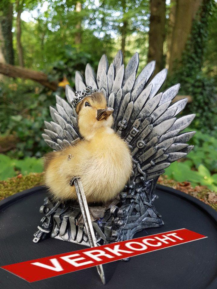 Eendje taxidermy `The King of Game Of Thrones ` in opgemaakte Stolp - Taxidermy - Opgezet - Geprepareerd