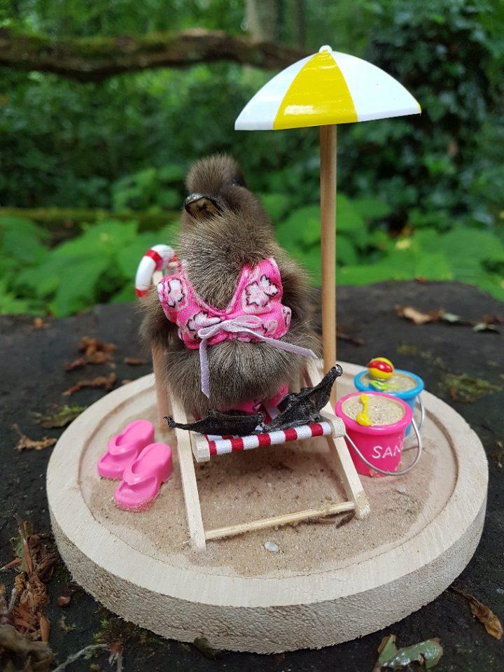 Eendje taxidermy `Stranddag Duck ` in opgemaakte Stolp - Taxidermy - Opgezet - Geprepareerd